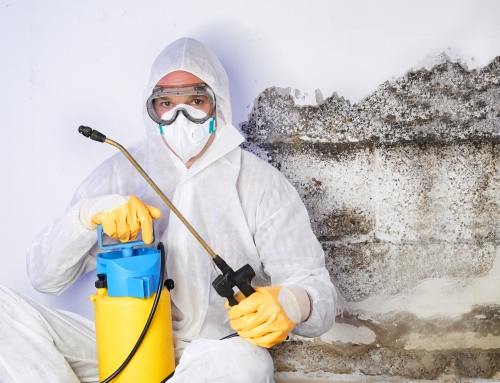 How to Find a Good Mold Remediation Company